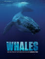 Whales Tohora: The Whales and Dolphins of Aotearoa New Zealand